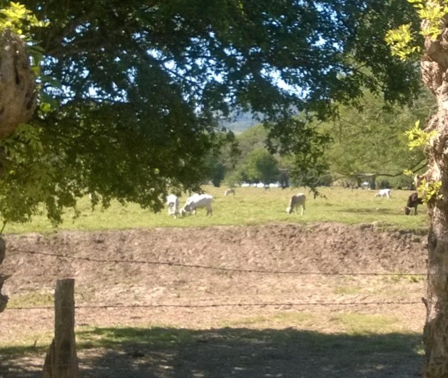 Atanan a vaqueros y roban 10 cabezas de ganado